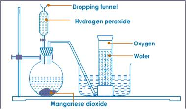 Oxygen Production